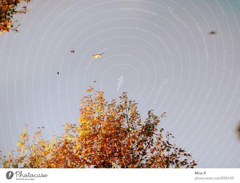 der Herbst fliegt weg Himmel Wolkenloser Himmel Klima Wetter Schönes Wetter Wind Sturm Baum Blatt fallen fliegen Wärme mehrfarbig Stimmung Herbstbeginn