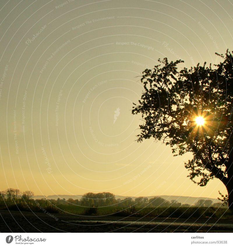 und noch'n Baum .... Blatt Wolken Blüte Stimmung Ausflug Spaziergang Blattknospe Sauerstoff Blattgrün Photosynthese Obstbaum Bilderrätsel Feldmark