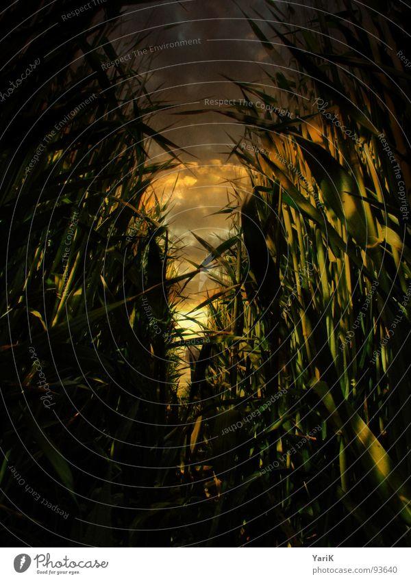 dunkles feld grün rot gelb dunkel Gras braun orange Feld Vergänglichkeit Tunnel Schilfrohr Fußweg Halm Flucht untergehen Weizen