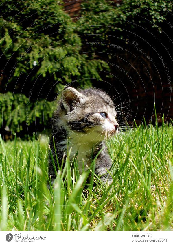 kitty cat Einsamkeit Spielen Gras Garten Katze klein süß Fell niedlich Halm Säugetier Pfote Haustier Schnauze Krallen Miau