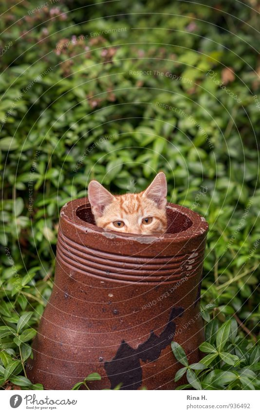 Eckstein.... Garten Katze 1 Tier Tierjunges Spielen Neugier niedlich braun grün verstecken Röhren Farbfoto Außenaufnahme Schwache Tiefenschärfe Tierporträt