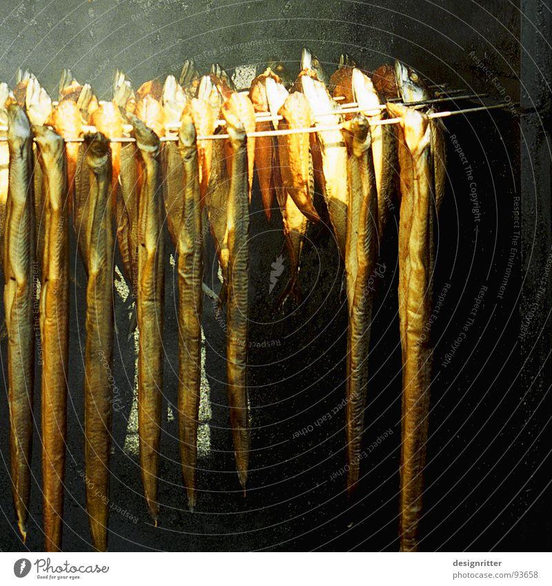 Rauchen ist tödlich Ernährung See Fisch lecker Ekel Ostsee Lastwagen Geschmackssinn Aal Kipper geräuchert Räucherfisch
