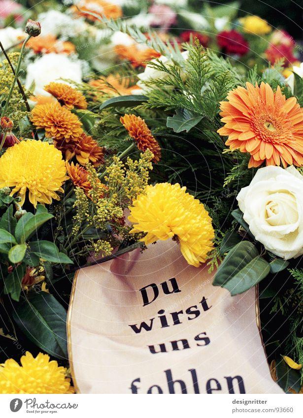 Abschied Blume Freude Tod Trauer Verzweiflung verloren Gott verlieren Friedhof Götter Grab losgelöst
