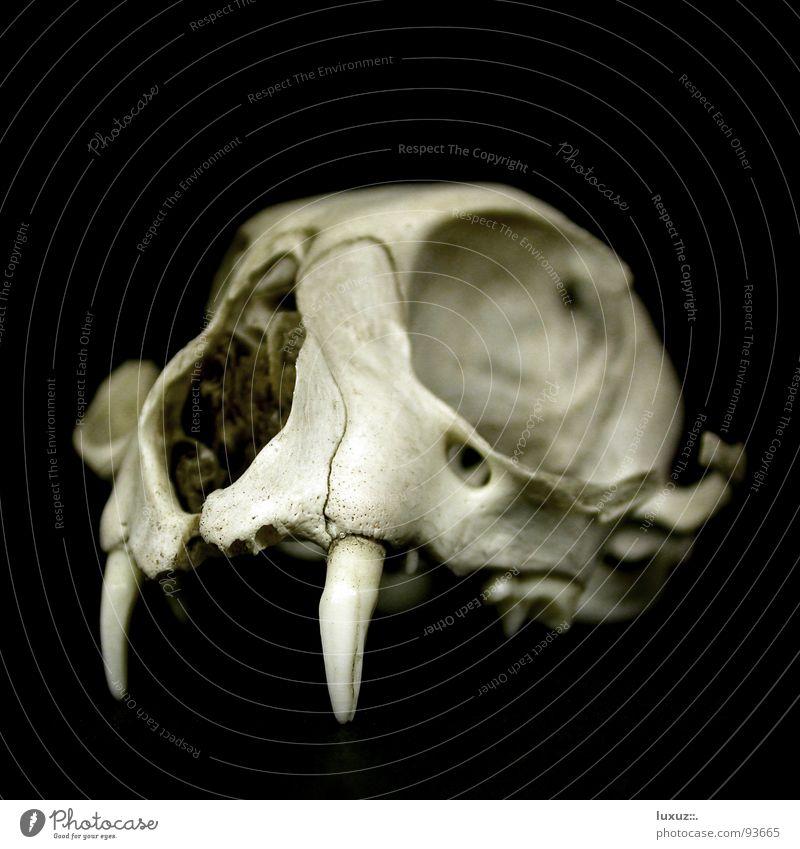 Schwarze Magie II Paddel Skelett schwarz dunkel Teufel kaputt grauenvoll unheimlich geisterhaft außergewöhnlich Trauer Vergänglichkeit Tod obskur Trophäe