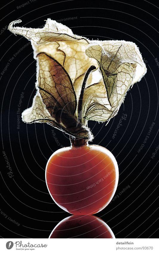 FRÜCHTCHEN Frucht Dessert lecker süß Physalis Beleuchtung Farbfoto Studioaufnahme Licht Schatten Reflexion & Spiegelung