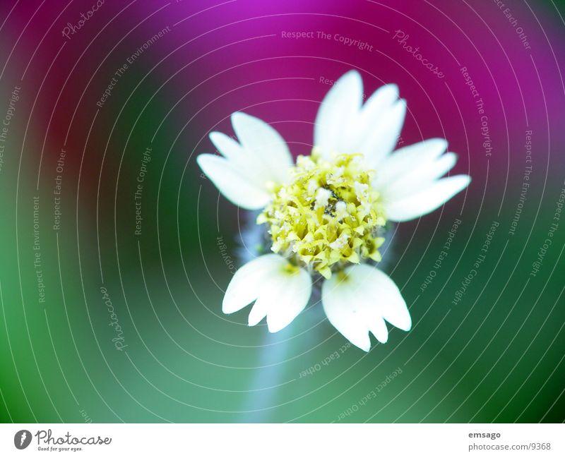 just cute Blume Nahaufnahme Unschärfe Detailaufnahme amaise Natur nah aufname