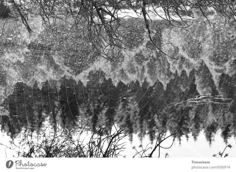 Moorsee. Umwelt Natur Landschaft Pflanze Wasser schlechtes Wetter Baum See Blick ästhetisch natürlich grau silber weiß Gefühle Schwarzweißfoto Zweige u. Äste