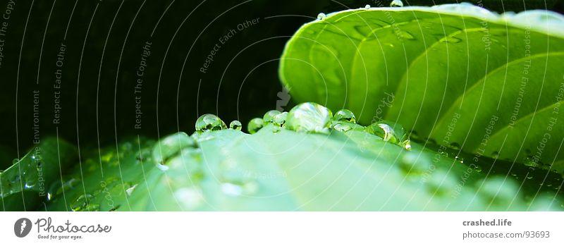 Drops I Natur Pflanze grün Wasser Blatt schwarz Garten Regen Wassertropfen nass Klarheit nah Kristallstrukturen gestreift feucht Salat