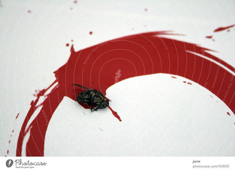 Flatsch fast Matsch rot Tier Tod Fliege Trauer Kreis Insekt Gemälde Verzweiflung Blut spritzen Zeichnung