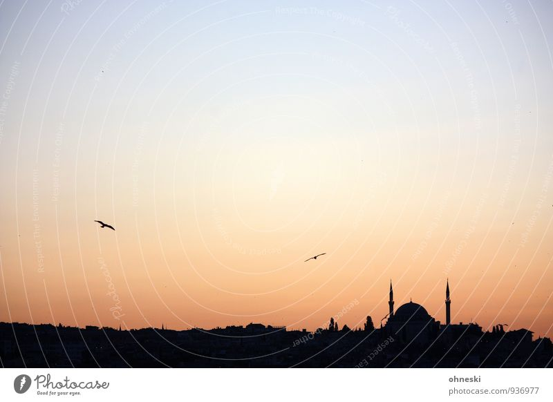 Morgenland Ferien & Urlaub & Reisen Stadt Ferne Architektur Gebäude Religion & Glaube Vogel Horizont Bauwerk Türkei Istanbul Islam Moschee
