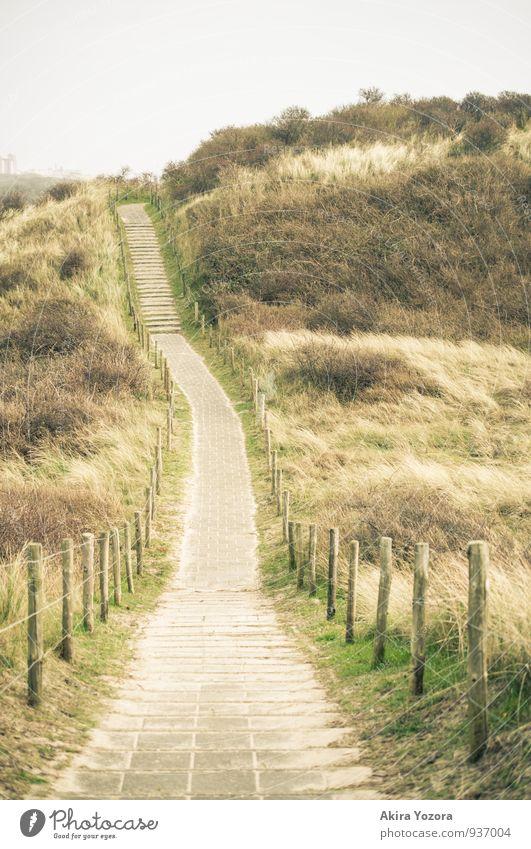 Irgendwo zwischen den Dünen. Natur Landschaft Himmel Gras Sträucher gehen laufen Ferien & Urlaub & Reisen wandern braun gelb grau grün Idylle Wege & Pfade