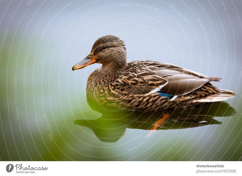 Entendame Natur ruhig Tier Umwelt Vogel Flügel beobachten