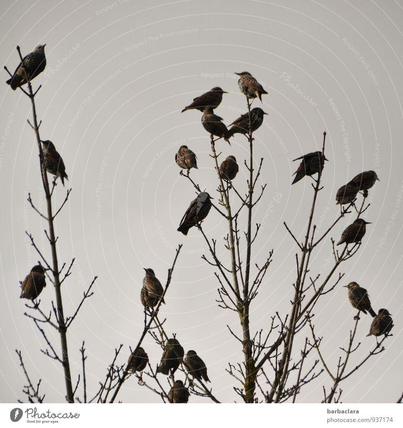 Staraufgebot Natur Pflanze Tier Himmel Herbst Baum Sträucher Vogel Tiergruppe sitzen Zusammensein viele Klima Sinnesorgane Umwelt Wandel & Veränderung