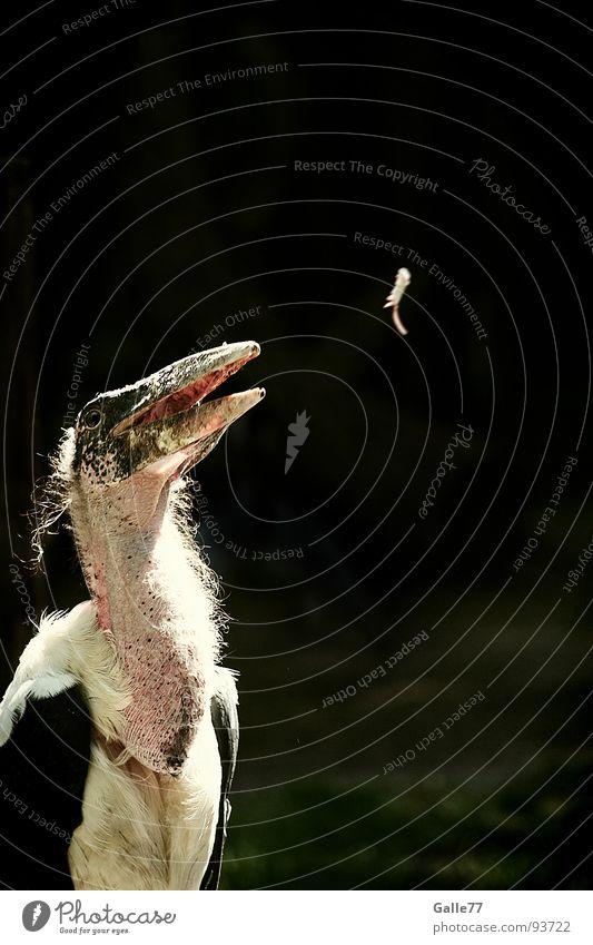 Happa happa Vogel Feder genießen lecker Appetit & Hunger Mahlzeit Schnabel Maus füttern hässlich Storch Futter Magen Gier Tier Verdauungsystem