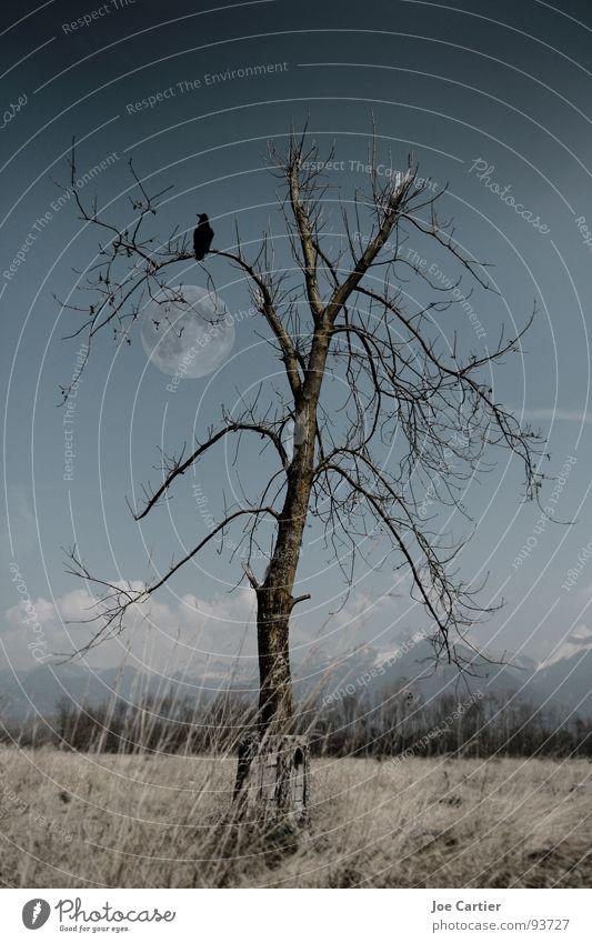 Mondschein Baum Einsamkeit dunkel Traurigkeit Feld mystisch Rabenvögel