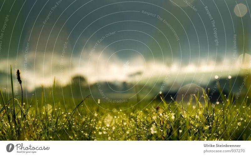Nebelwallen 7 Natur Pflanze grün Wasser Baum Landschaft Wald Umwelt Herbst Gras natürlich glänzend Luft Feld leuchten