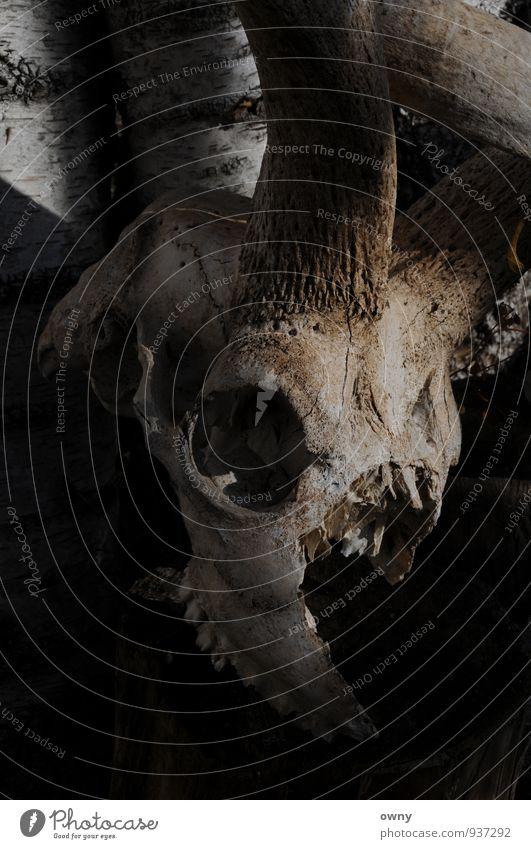 horny Natur alt Tier Traurigkeit Herbst Gefühle Wege & Pfade Tod Kunst Angst Design Dekoration & Verzierung gefährlich Abenteuer Zeichen Kitsch
