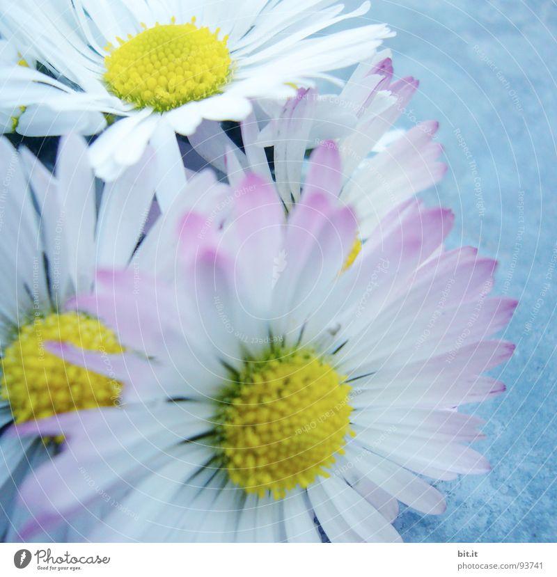 TAUSENDSCHÖN Philosoph Wiese Romantik rosa Gänseblümchen Frühling Alm Waldlichtung Hippie Bergwiese Schundroman Blumenstrauß Dorfwiese Schwärmerei Blumenbeet
