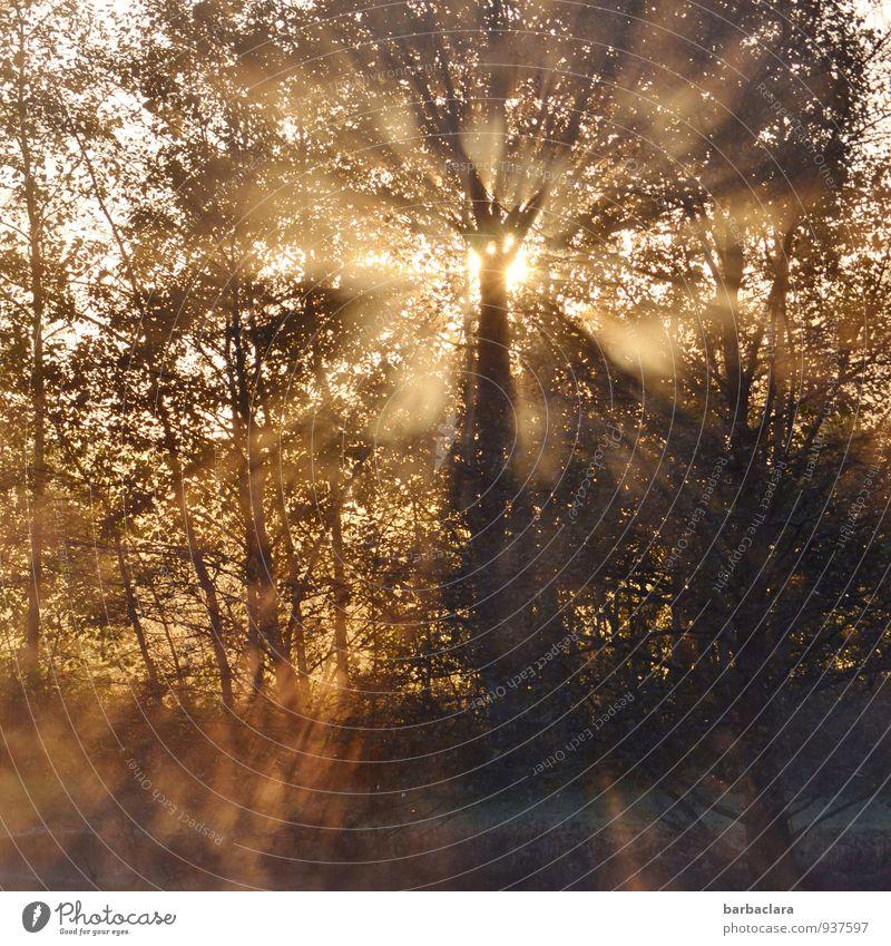 It's a new day Natur Sonne Herbst Nebel Baum Sträucher See leuchten fantastisch Gefühle Stimmung Lebensfreude Beginn Energie Hoffnung Kraft ruhig Sinnesorgane