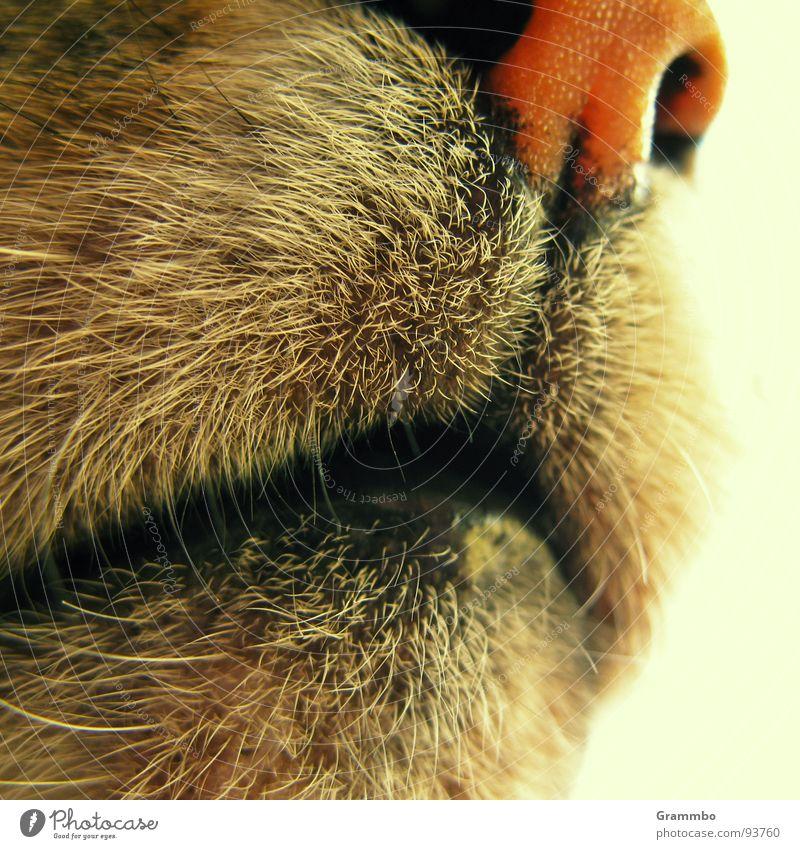Schenk mir ein Lächeln schmollen Fell Katze Geruch Mörder Appetit & Hunger Schnurren Säugetier Ja - ich bin eine Katze Mund Nase