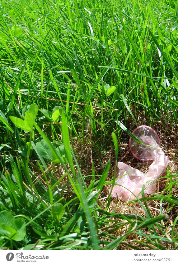 frühlingserwachen grün Sommer Freude Wiese Wärme Gras Feste & Feiern frei Physik heiß Halm satt Kondom Latex Familienplanung