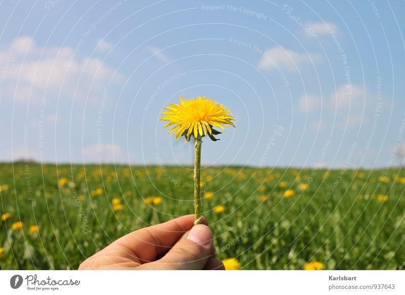 Löwember Natur Pflanze Sommer Landschaft Umwelt Frühling sprechen Glück Gesundheit Feste & Feiern Freiheit Gesundheitswesen Lifestyle Freizeit & Hobby