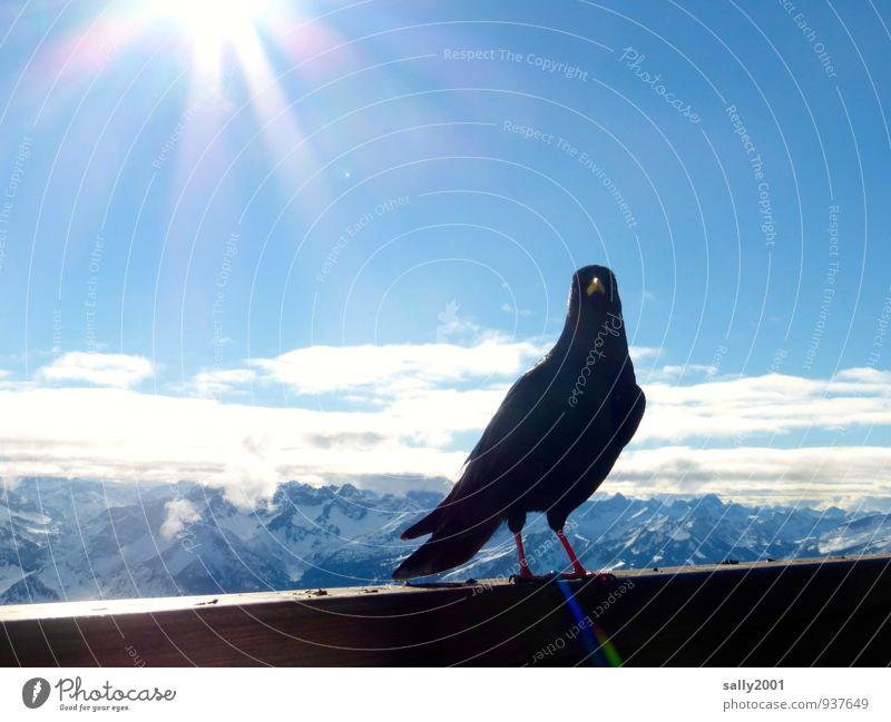 ein sonniges HAPPY BIRTHDAY... Himmel Natur Sonne Erholung Tier Ferne Winter schwarz Berge u. Gebirge Vogel Horizont stehen frei hoch ästhetisch beobachten