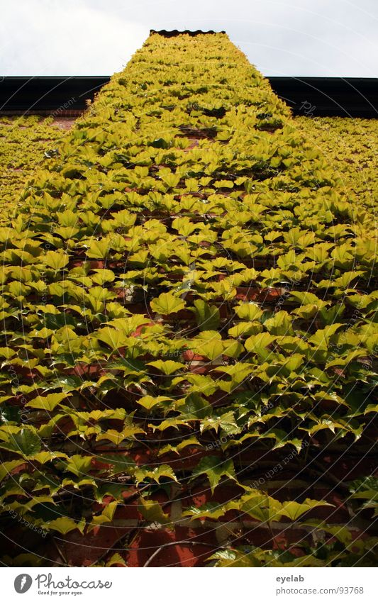 Aktion Täuschen, Tarnen, Verpissen alt Pflanze grün schön Sommer Blatt Haus Fenster Gebäude Mauer Garten Park Vergänglichkeit historisch Vergangenheit Wein