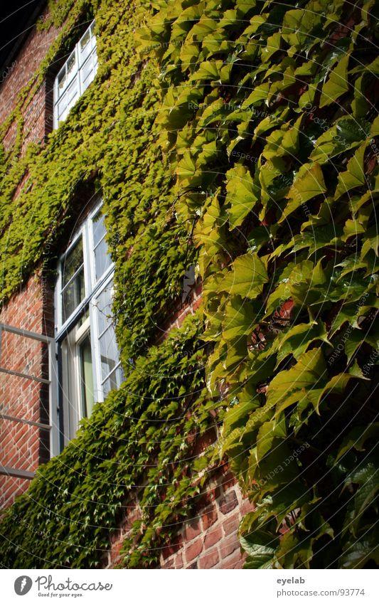 Assimilierung Blatt Pflanze Naturwuchs Mauerpflanze Gebäude Fenster Gitter Backstein historisch schön bewachsen Ranke Märchen Festung Verhext verschlafen Rausch