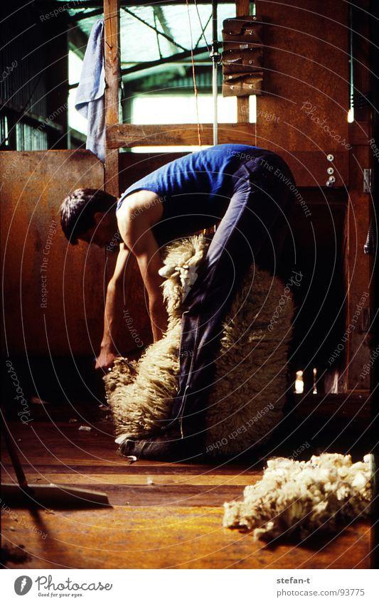 hard working man I Mensch Mann Tier Arbeit & Erwerbstätigkeit Holz Haare & Frisuren Wärme Bodenbelag Physik heiß Fell festhalten Landwirt Hütte Handwerk