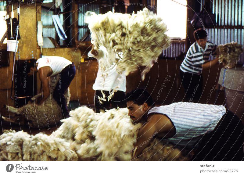 hard working man II Mensch Mann Tier Arbeit & Erwerbstätigkeit Holz Haare & Frisuren Wärme Bodenbelag Physik heiß Fell festhalten Landwirt Hütte Handwerk