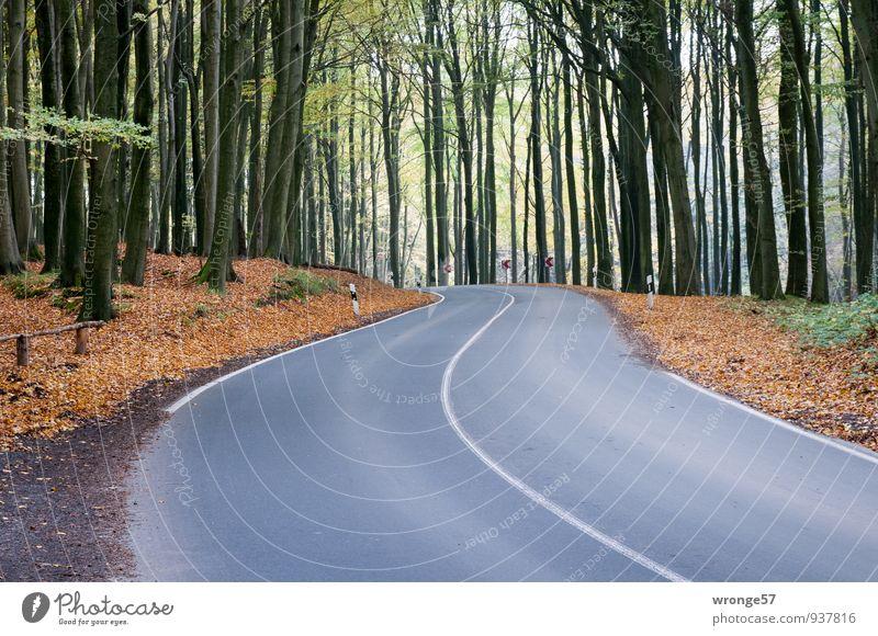 L303 Umwelt Herbst Baum Buchenwald Jasmund Verkehrswege Straße Landstraße braun grün schwarz Asphalt Kurve Mittelstreifen Schilder & Markierungen Straßenrand