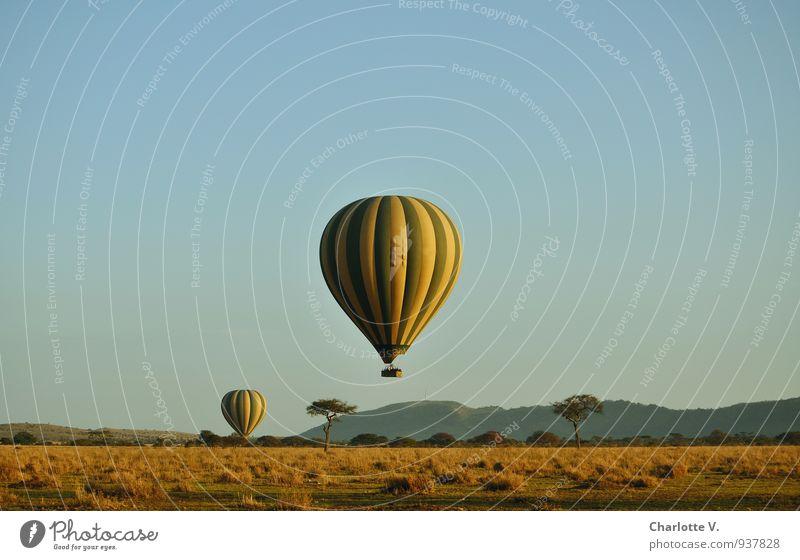 Flugsafari Reichtum Ballonfahrt Ferien & Urlaub & Reisen Tourismus Abenteuer Safari Ballone Natur Landschaft Sommer Baum Gras Wildpflanze Savanne Serengeti