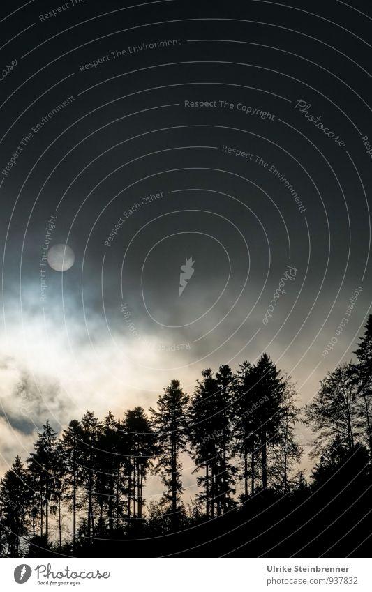 Novembermorgen Himmel Natur Pflanze Sonne Baum Landschaft Wolken dunkel Wald Umwelt Herbst Nebel leuchten Hügel gruselig Tanne