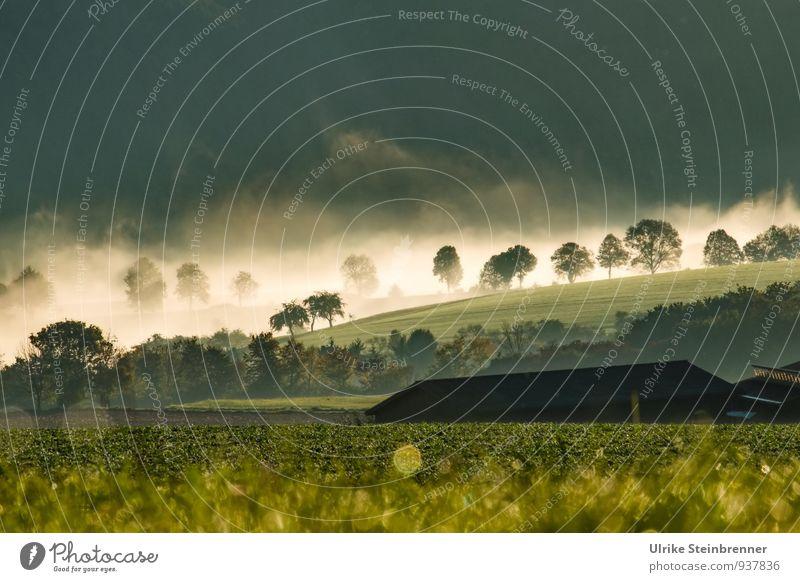 Nebelwallen 4 Natur Pflanze grün Wasser Baum Landschaft Haus Wald Umwelt Herbst Gras natürlich Luft Feld leuchten
