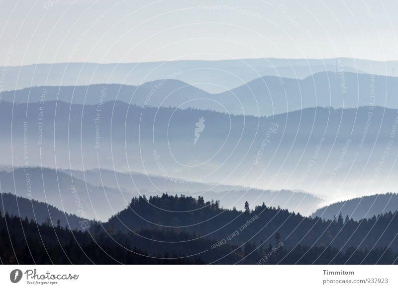 Weitere Aussichten. Umwelt Natur Landschaft Pflanze Himmel Sonnenlicht Herbst Wetter Nebel Wald Hügel Schwarzwald Linie Blick ästhetisch natürlich blau grau