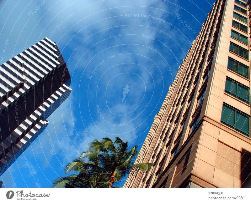 Honolulu arch Himmel Gebäude Architektur Hochhaus modern Palme Hauptstadt Hawaii Bürogebäude