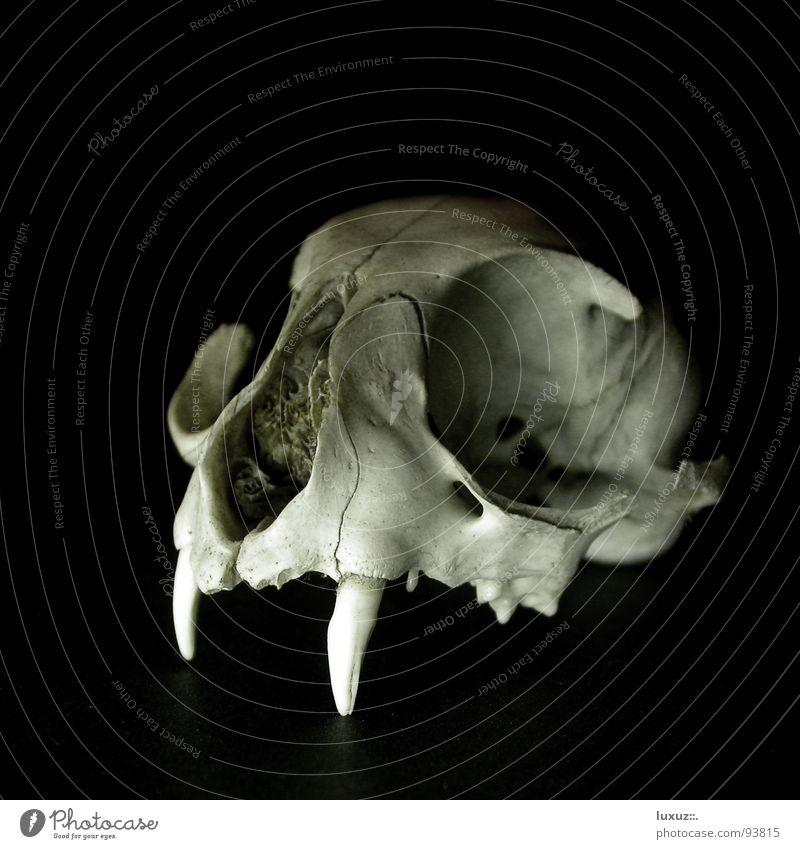 Schwarze Magie IV alt schwarz dunkel Tod Angst kaputt Trauer außergewöhnlich Vergänglichkeit Gebiss obskur Säugetier Zauberei u. Magie Teufel unheimlich
