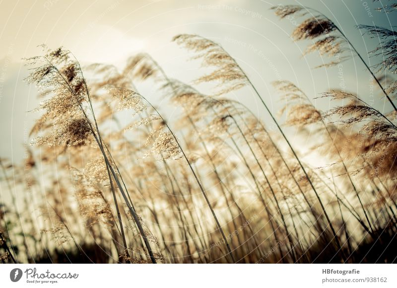 Gräser Natur Ferien & Urlaub & Reisen Pflanze Einsamkeit Umwelt Wiese Küste Gras See braun Stimmung Feld elegant Sträucher Warmherzigkeit Romantik