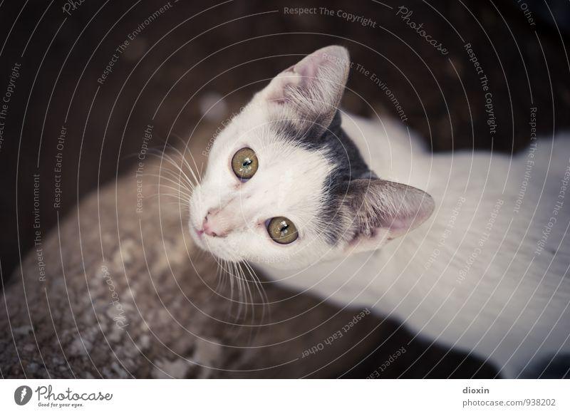 hungry eyes Tier Haustier Katze Tiergesicht 1 Tierjunges Blick kuschlig niedlich Natur Farbfoto Außenaufnahme Textfreiraum links Tag Tierporträt