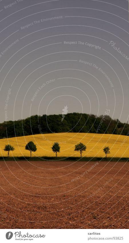Falscher Raps Himmel grün Baum Wald Landschaft Frühling Erde braun Feld Hügel Ackerbau Rapsfeld Brachland dunkelgrün