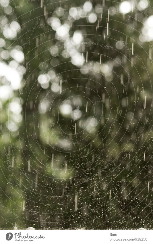 der kleine november möchte gerne... Natur Landschaft Wassertropfen Wetter schlechtes Wetter Unwetter Regen Baum Park Wald Tropfen fallen grün Bewegung