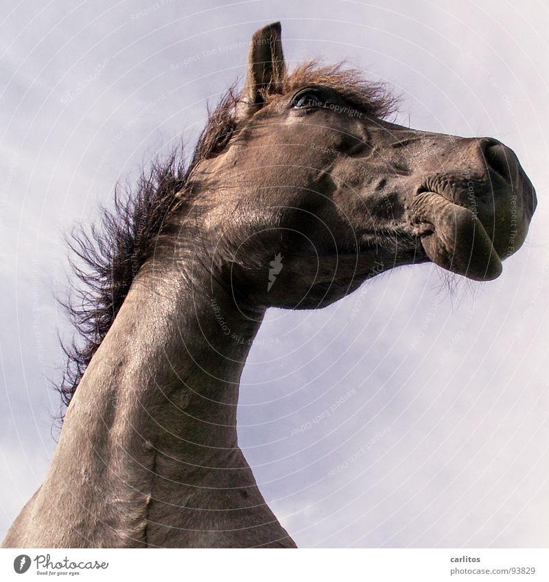 Überblick Himmel ruhig Tier Erholung Wiese verrückt Pferd Frieden Sonntag Mähne Wunschtraum Nüstern Veterinär wiehern