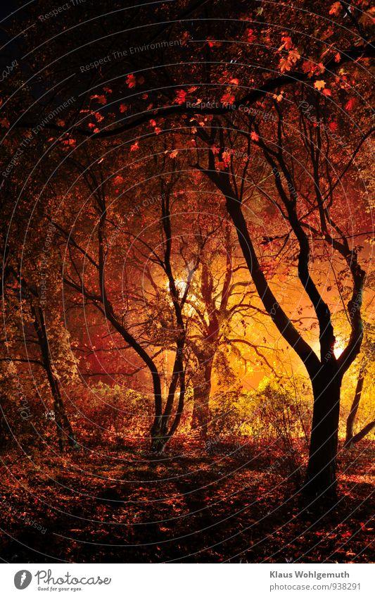 Düstere Visionen in Schwarz, Rot, Gold Fußballplatz Natur Landschaft Pflanze Nachthimmel Herbst Baum Sträucher Park Wald Salow leuchten bedrohlich dunkel