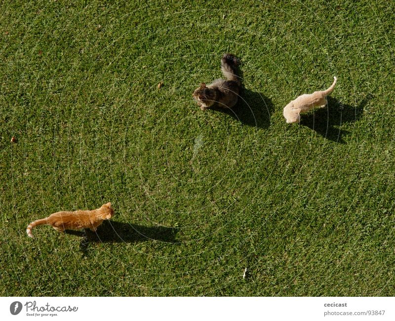 happy three cats Tier animal grass garden play relationship friends triangle shadow morning