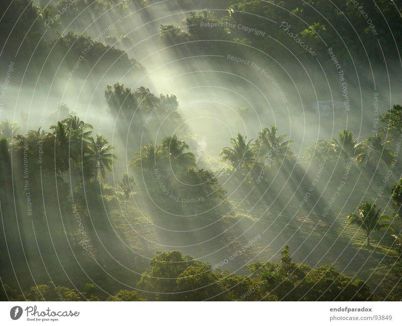 Every time I think I'm gonna wake up back in the jungle... Zeit Natur grün Ferien & Urlaub & Reisen ruhig Farbe Wald Beleuchtung Nebel Frieden Asien Palme sanft harmonisch Baum Oktober