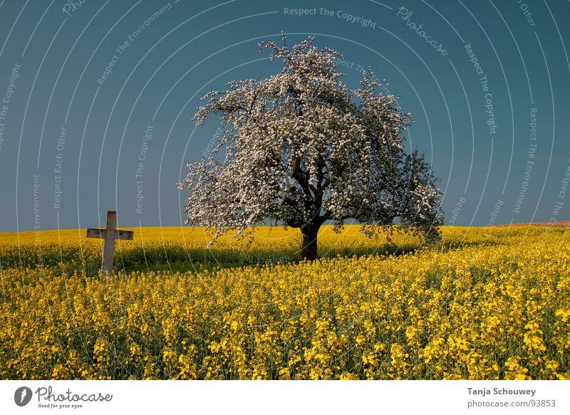 Stille Natur Baum ruhig Frühling Landschaft Rücken Frieden mystisch Rapsfeld