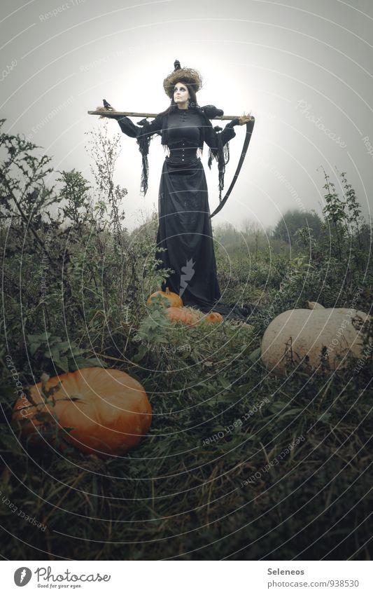 Halloween is coming Karneval Mensch feminin Frau Erwachsene 1 Herbst Nutzpflanze Kürbis Feld gruselig Tod Sense Sensenmann Krähe Nest Farbfoto Außenaufnahme