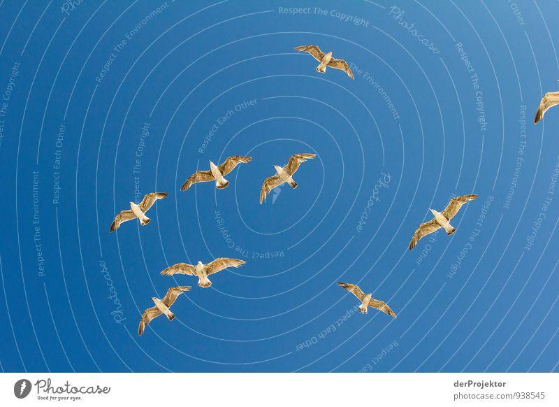 Fliegt Vögel fliegt... Umwelt Natur Tier Luft Himmel Wolkenloser Himmel Sommer Schönes Wetter Küste Meer Vogel Tiergruppe Schwarm Gefühle Stimmung Optimismus