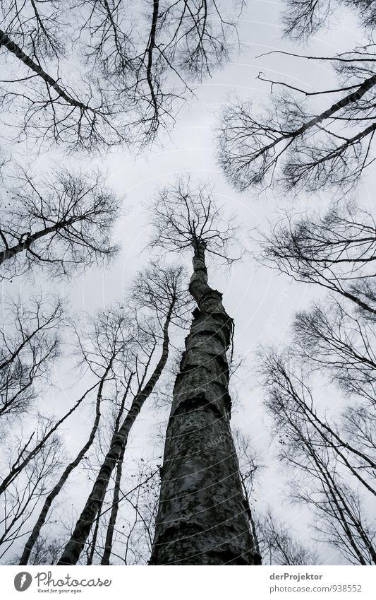 Grau ist der November Umwelt Natur Landschaft Pflanze Himmel Herbst Klima Klimawandel schlechtes Wetter Baum Wald Urwald Gefühle Neugier Angst Entsetzen